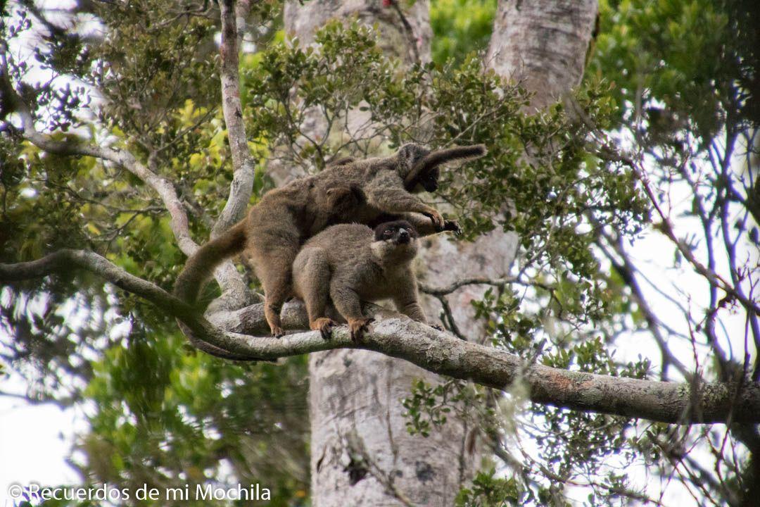 Visita al Parque Nacional Andasibe-Mantadia
