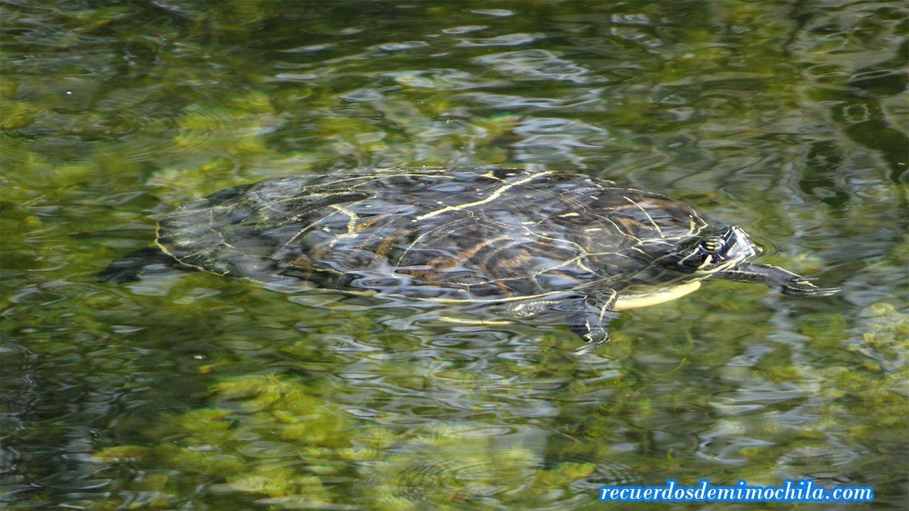 Visita a los Everglades