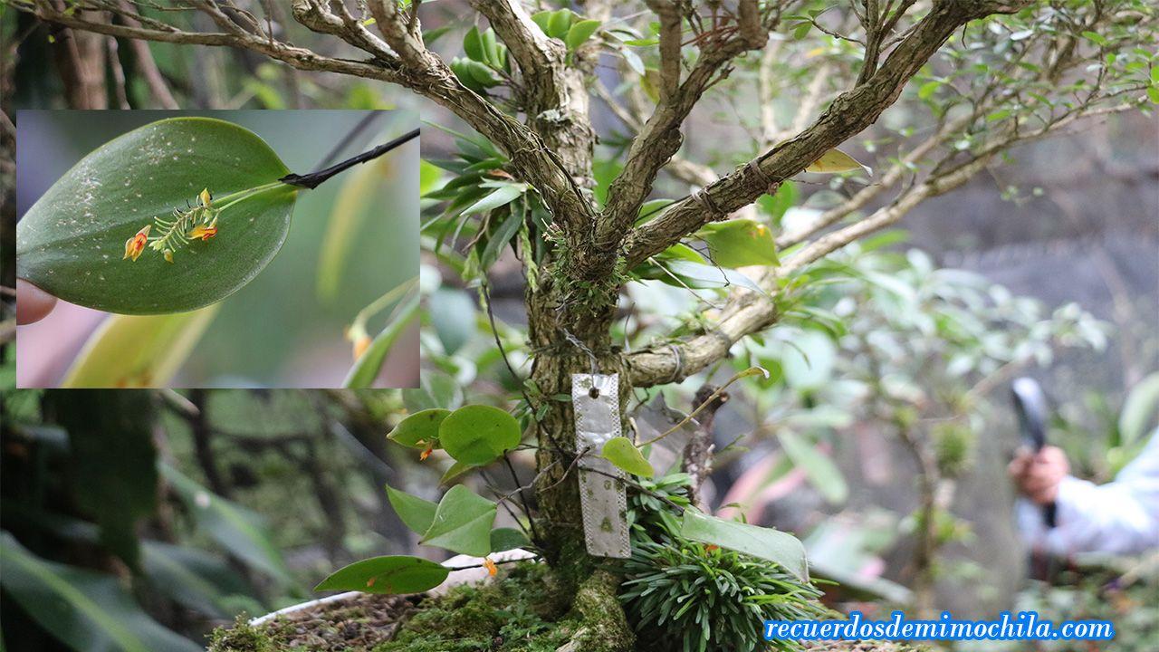 jardín de orquídeas monteverde
