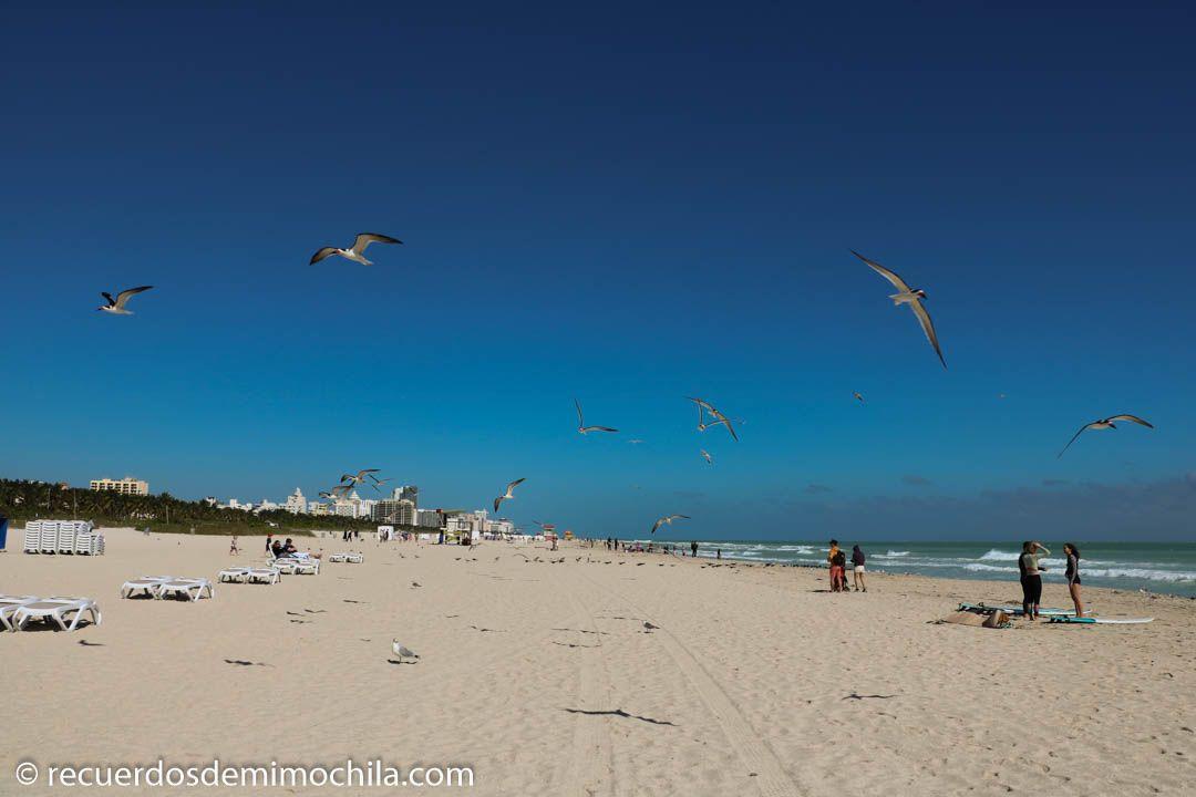 Qué ver y hacer en Miami en dos días