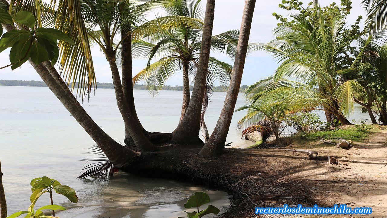 Visita a Playa Estrella en Bocas del Toro