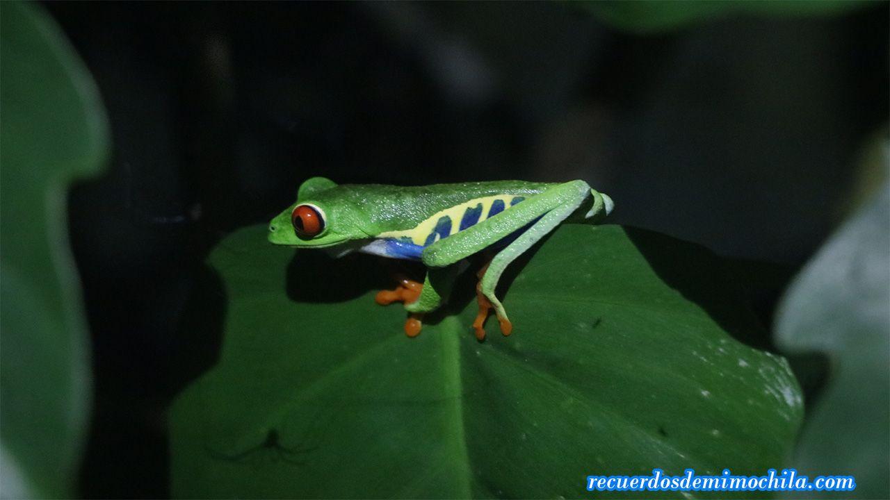 Visita al Monteverde Theme Park
