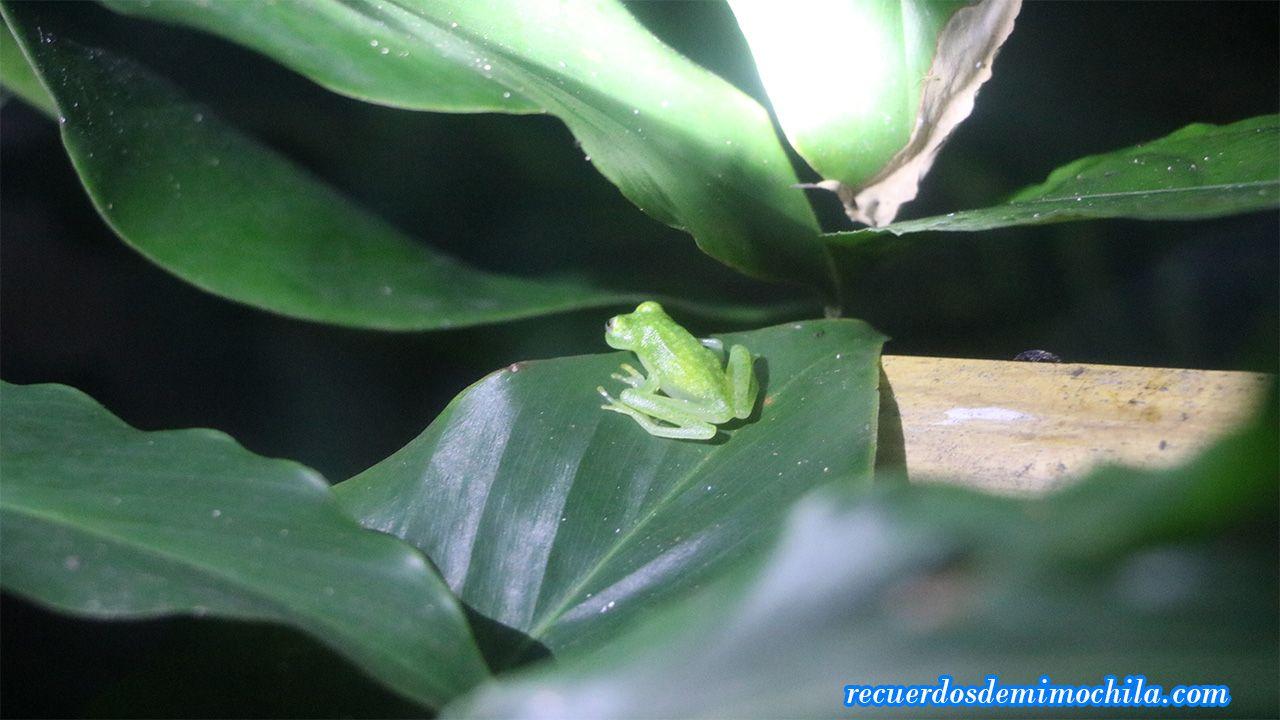 Ranario de monteverde