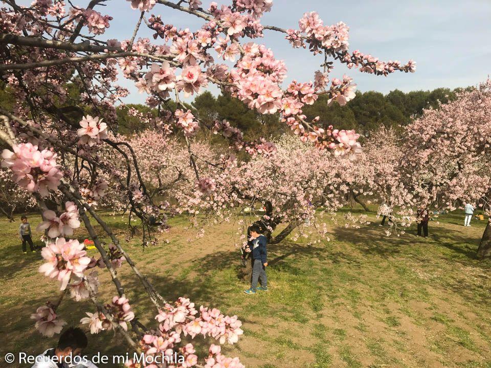 Almendros en flor en Quinta de los molinos