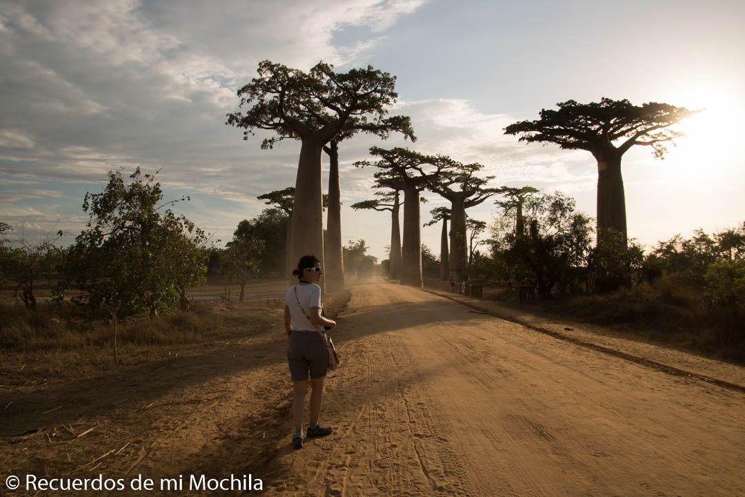 La mítica avenida de los Baobabs